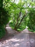 Estradas transversaas em uma floresta Imagens de Stock Royalty Free