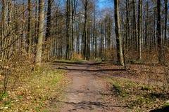 Estradas transversaas nas madeiras Fotografia de Stock