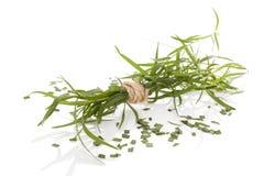 Estragon Artemisia dracunculus Στοκ Εικόνα