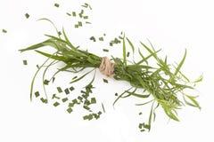 Estragon Artemisia dracunculus Στοκ Εικόνες