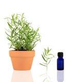 estragon essentiel d'huile d'herbe Image libre de droits