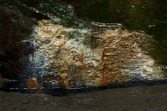 Estrato na rocha molhada no parque estadual Imagens de Stock