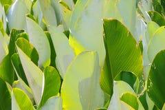 Estratti del foglio con differenti tonalità di verde Fotografia Stock Libera da Diritti