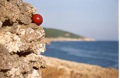Estratto Fotografie Stock
