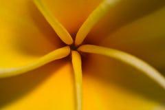 Estratto dei petali del fiore Fotografie Stock Libere da Diritti