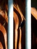 Estratto del cavallo Fotografia Stock Libera da Diritti