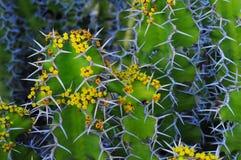Estratto del fiore del cactus Fotografie Stock