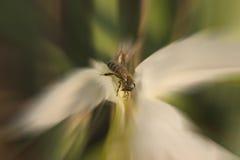Estratto del fiore e dell'ape Immagine Stock Libera da Diritti