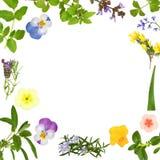 Estratto del foglio dell'erba e del fiore Fotografia Stock