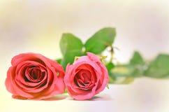 Estratto del fondo di Rosa (buon per materiale illustrativo, la carta da parati e la progettazione decorativa) Fotografia Stock