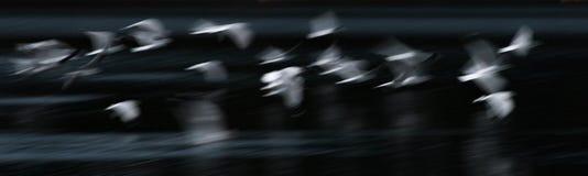 Estratto del gabbiano di volo Immagine Stock Libera da Diritti