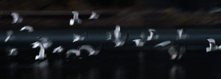 Estratto del gabbiano di volo Fotografie Stock Libere da Diritti