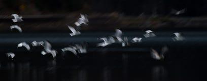 Estratto del gabbiano di volo Fotografia Stock Libera da Diritti