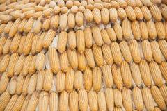 Estratto del grano del cereale Fotografia Stock Libera da Diritti