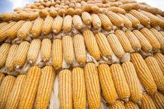 Estratto del grano del cereale Immagine Stock Libera da Diritti