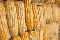 Estratto del grano del cereale Immagini Stock Libere da Diritti