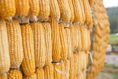 Estratto del grano del cereale Fotografia Stock