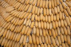 Estratto del grano del cereale Immagini Stock