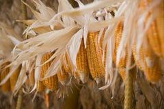 Estratto del grano del cereale Fotografie Stock Libere da Diritti