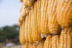 Estratto del grano del cereale Fotografie Stock