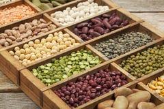 Estratto del legume Fotografia Stock