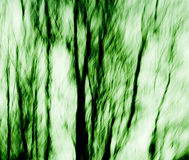 Estratto dell'albero Fotografia Stock