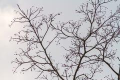 Estratto dell'uccello sulla siluetta del ramo di albero Immagini Stock Libere da Diritti