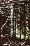 Estratto della foresta Fotografie Stock