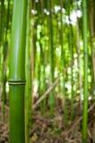 Estratto della foresta di bambù Immagini Stock