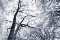 Estratto della foresta di inverno immagine stock