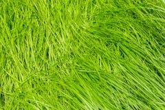 Estratto della natura con il fondo dell'erba verde Fotografia Stock
