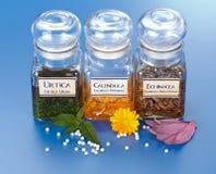 Estratto della pianta in bottiglie e granelli omeopatici Fotografia Stock Libera da Diritti