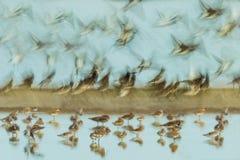 Estratto della riva dell'uccello Immagini Stock