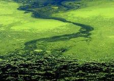 Estratto delle alghe Immagine Stock Libera da Diritti