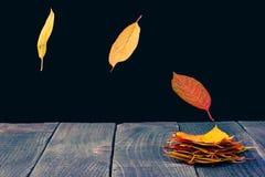 Estratto delle foglie altre Immagine Stock Libera da Diritti