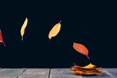 Estratto delle foglie altre Fotografie Stock