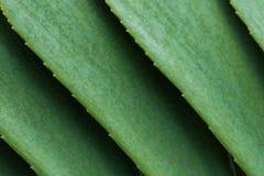 Estratto delle foglie verdi Immagine Stock