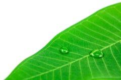 Estratto delle gocce di acqua sulle foglie Immagine Stock