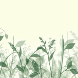 Estratto delle piante Immagini Stock