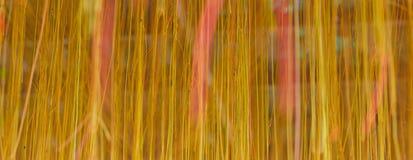 Estratto delle radici. Fotografia Stock
