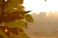 Estratto di autunno la maggior parte della bellezza Fotografie Stock