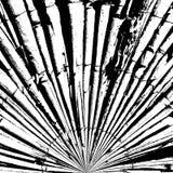 Estratto di bambù di struttura Immagini Stock