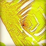 Estratto di Digitahi immagine stock