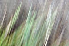 Estratto di erbe naturale Fotografie Stock