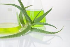 Estratto di piante. Chimica naturale. fotografia stock