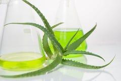 Estratto di piante. Chimica naturale. Immagine Stock Libera da Diritti