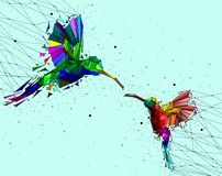 Estratto di poli colibrì basso delle coppie con la rete di collegamento del punto, concetto geometrico animale, vettore illustrazione di stock