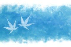 Estratto fresco giapponese della foglia di acero sul fondo blu della pittura dell'acquerello di estate Fotografie Stock