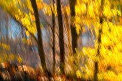 Estratto frondoso Fotografia Stock Libera da Diritti