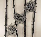 Estratto - gambo rosa secco con la spina Fotografia Stock Libera da Diritti